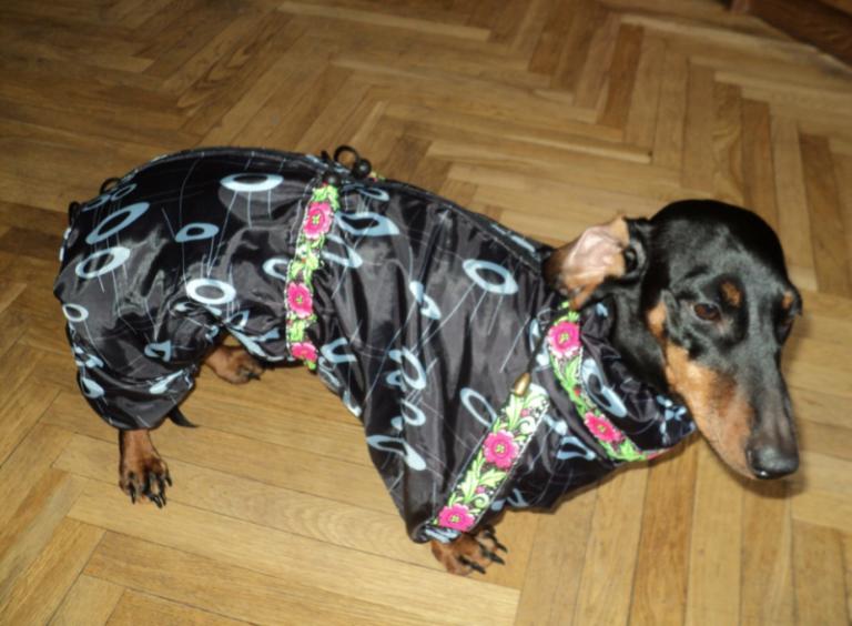 Бізнес-ідея пошиття одягу для собак