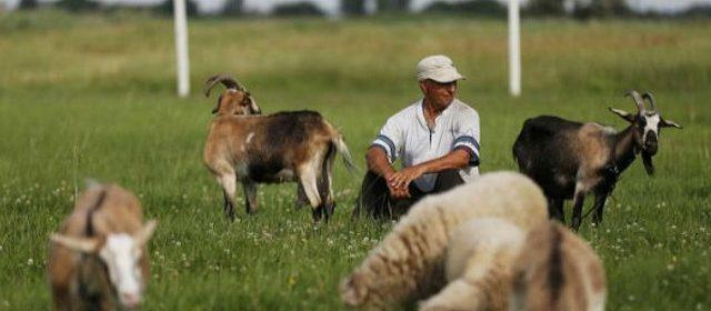 Українським фермерам для успішної роботи часто не вистачає економічної освіти