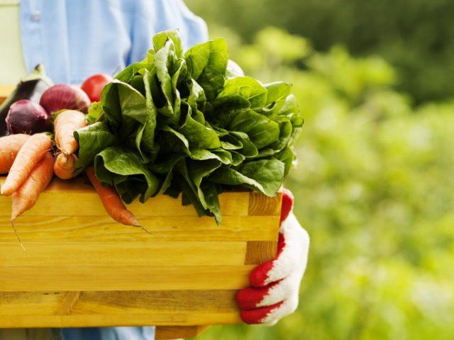 Мінагропрод веде переговори з Єврокомісією про безмитне ввезення органічної продукції в ЄС