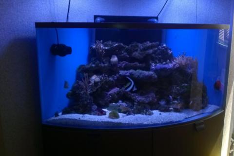 Бізнес-ідея виробництва і продажу акваріумів
