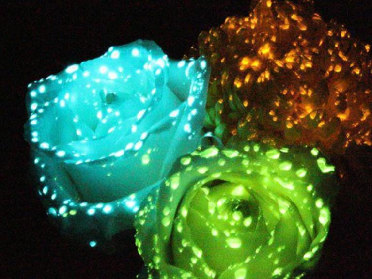 Оформление живых цветов надписями и наклейками.0002670e_222287
