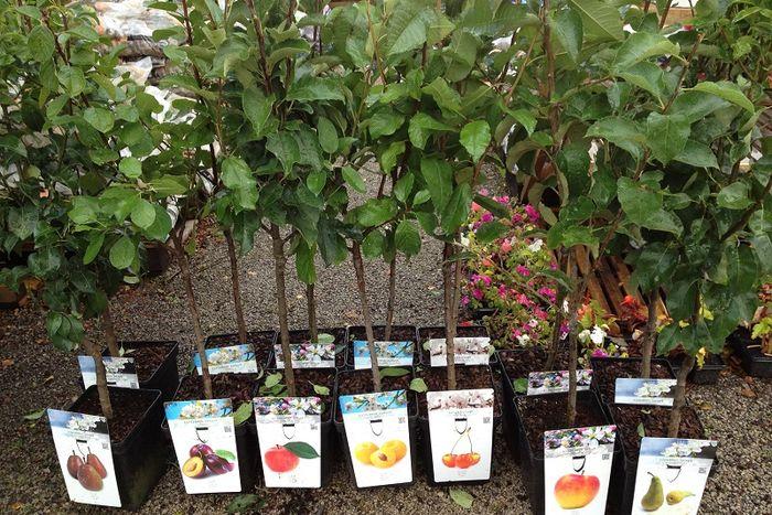 Как выбрать саженцы фруктовых деревьев?